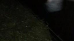 Сексуальная скотоложница ретиво дрочит жеребцу zoo кино загрузить