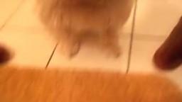 Лохматый пес смокчет письку чернокожей зоо частное